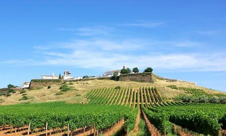 Vineyard at Portugal,Estremoz, Alentejo region.  Standard-Bild