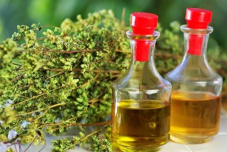 oregano plant: Olive  oil, vinegar and oregano bouquet.