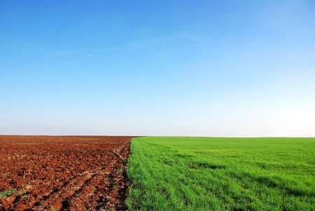 plowed:  plowed and green field background