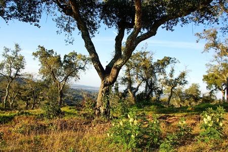 mediterranean forest: Landscape of mediterranean forest