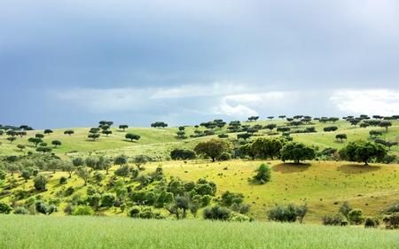 mediterranean forest: Mediterranean forest of oak trees