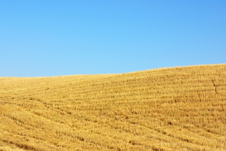 stubble: Texture of the stubble field in Portugal Stock Photo