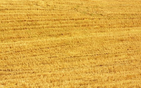 Closeup of straw texture on field photo