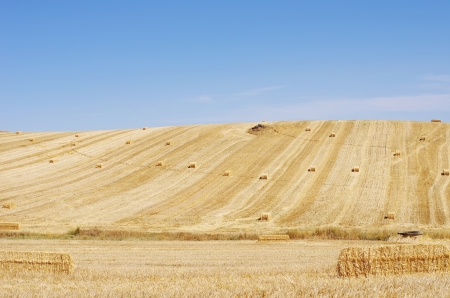 Stubble Field with straw bales photo