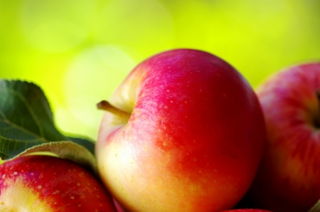 ripe red apples on table photo