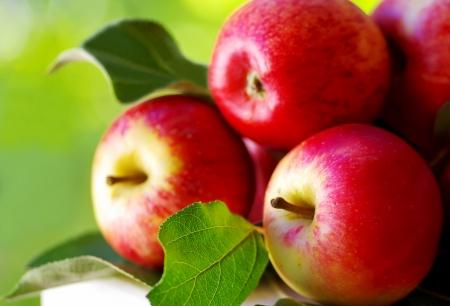 表、緑の背景に熟した赤いリンゴ 写真素材