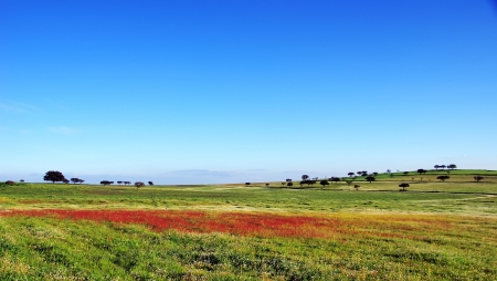 Landscape of portuguese field photo