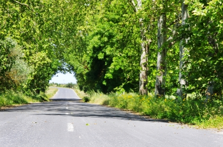 tunnel view: Row of trees in road at Portugal Stock Photo