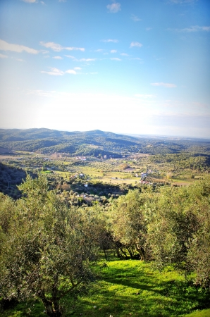 Olives tree at alentejo region, Portugal