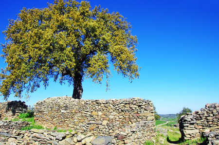 proto: Archaeological ruins of Castro da Cola, Ourique, Portugal.