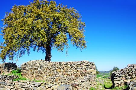 castro: Archaeological ruins of Castro da Cola, Ourique, Portugal.