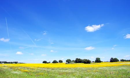 Spring landscape in Alentejo,south of  Portugal   photo