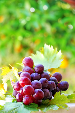 vinery: ripe grapes with green leaves Stock Photo