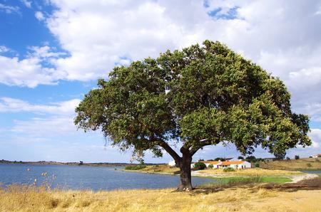 barrage: Alqueva barrage with solitary tree.  Stock Photo