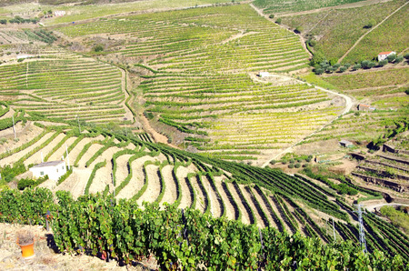 cropping: Landscape of Douro vineyards Stock Photo
