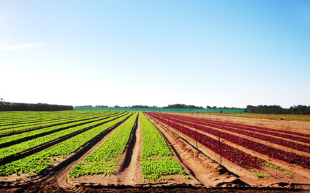 directed: arable land with young vegetables Stock Photo