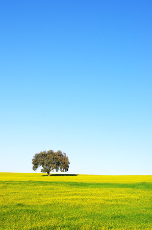 Tree in yellow field at Portugal photo