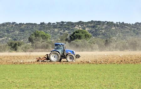 arando: Un tractor arando un campo con una bandada de gaviotas