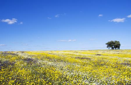 alentejo: Field of Alentejo region at Spring time