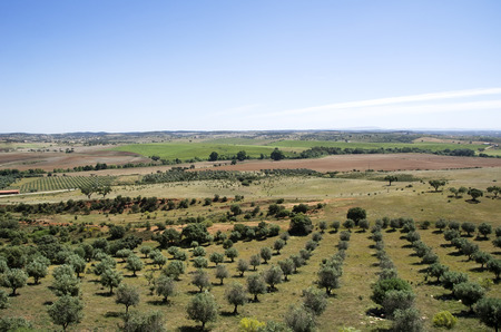 portugal agriculture: Landscape of agriculture fields of crops,alentejo,Portugal Stock Photo