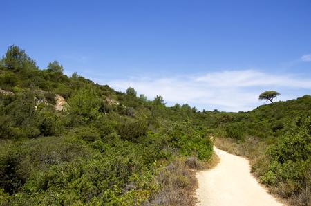 algarve: dirt road in field of  Algarve, Portugal