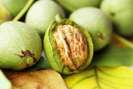 Green walnut, peeled and leaves Stock Photo