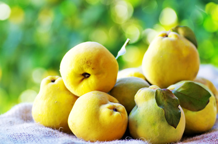 quinces with leaves on the table Stock Photo