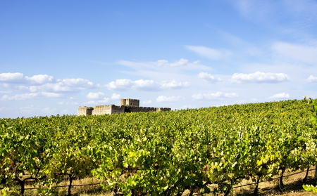 portugal agriculture: vineyard in south of Portugal, Alentejo region Stock Photo