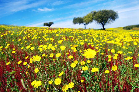 flowery field on spring at Portugal