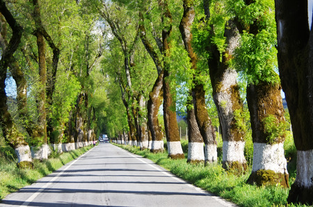 tunel: green tunel forest clean road in the Alentejo,Portugal Stock Photo
