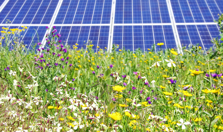 photovoltaic power station: Photovoltaic panels and wild flowers