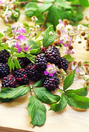 bramble: flowering branches of blackberries on table