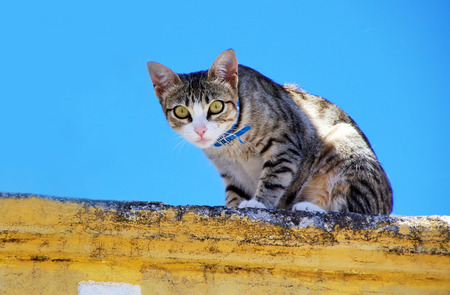 scraped: domestic cat in wall Stock Photo