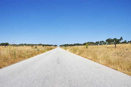portugal agriculture: Country Road at south of Portugal, Alentejo region