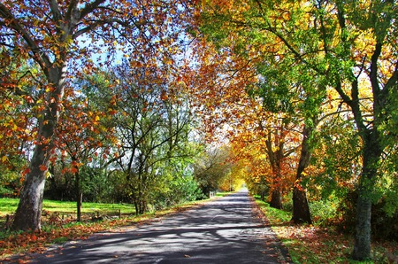 thoroughfare: old willows and some other trees with colorful leaves, alentejo, Portugal