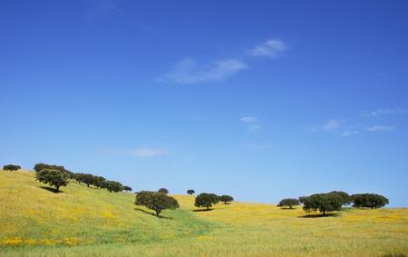 Oak trees in springtime field, Alentejo, Portugal