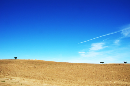 plowed field and trees at Alentejo region, Portugal