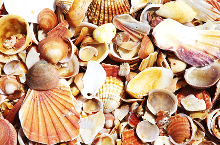 Seashell background, sea shells collection