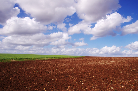 plowed field with green plants, cloudsky