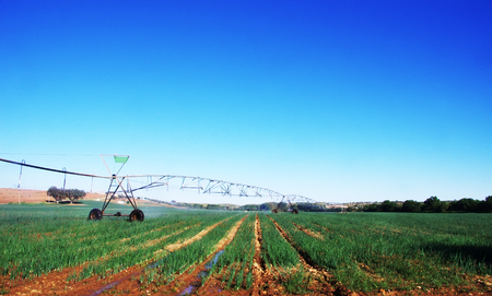 Center pivot irrigation in agricultural field of onion cultivation Stok Fotoğraf
