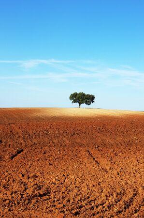tree in plowed field, alentejo region, Portugal Standard-Bild - 131221426