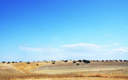 landscape of alentejo fields, south of Portugal Standard-Bild - 131221477