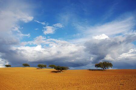 trees in plowed field, clouds in sky Standard-Bild - 137840066