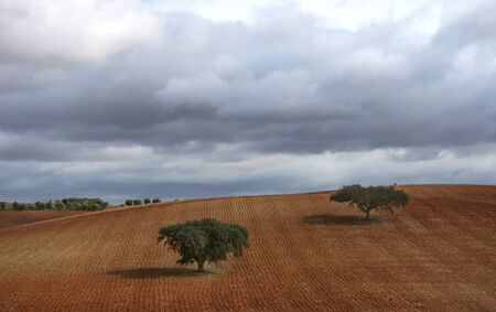 trees in plowed field at south of portugal Standard-Bild - 137840071