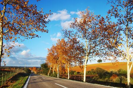 autumn road at south of Portugal Standard-Bild - 136270518