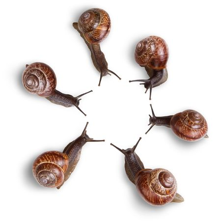 besiege: group of snails crawling around and looking to center Stock Photo