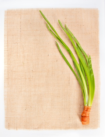 Sackcloth with fresh green onion as decor photo