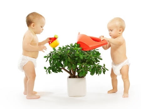 interested baby: Two kids watering a plant together. White background. Stock Photo