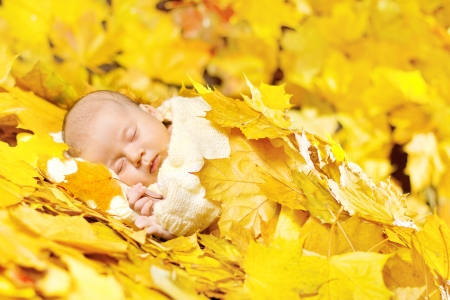 lying in leaves: Autumn newborn baby sleeping in maple leaves  Close up portrait