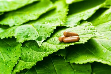 medicina natural: Píldoras sobre hojas verdes con gotas de agua